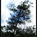 一棵樹.jpg