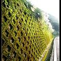 小綠壁.jpg