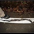 被輾斃的紅斑蛇.jpg