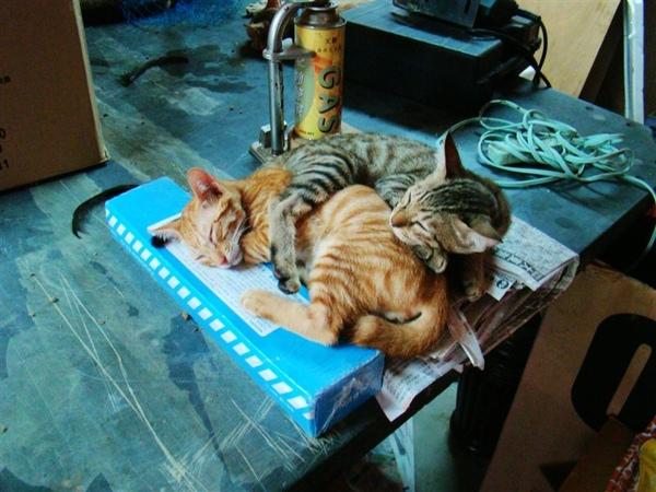 店裡真的好多貓貓.jpg