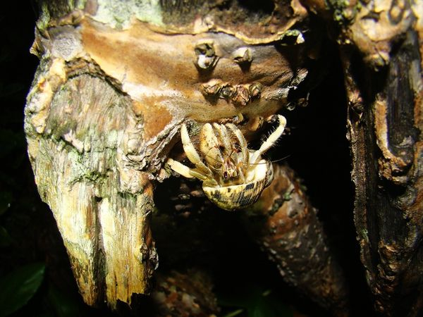 爬樹的小寄居蟹.jpg