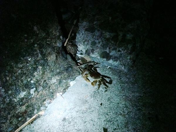 發現螃蟹.jpg
