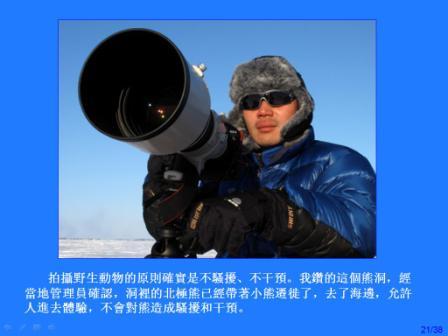 加拿大北極熊作者羅紅.JPG