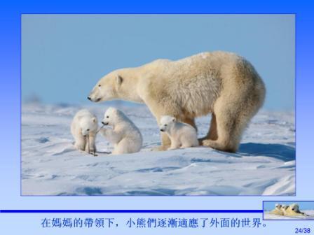 加拿大北極熊5.JPG