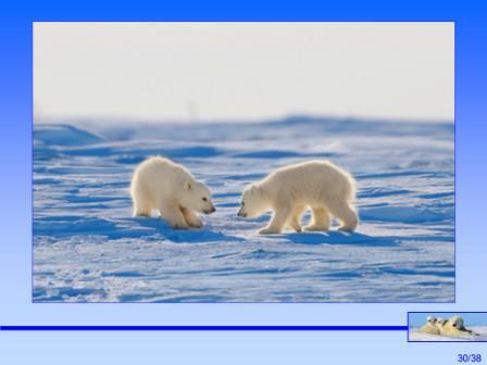 加拿大北極熊7.JPG