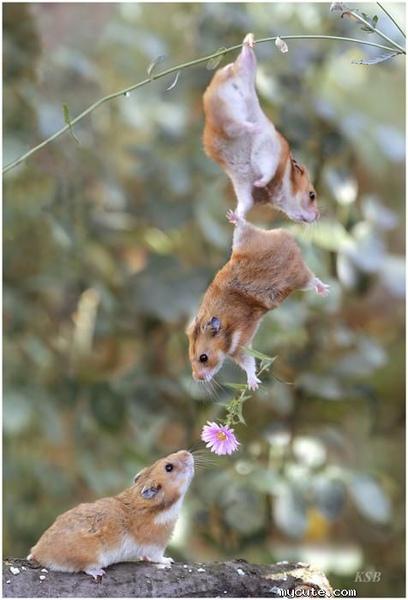 好可愛的老鼠追妹妹.jpg