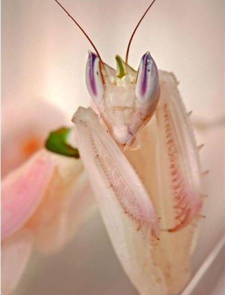 好漂亮的螳螂6.JPG