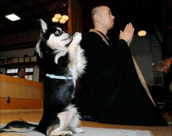 狗狗也在幫忙祈禱地球的天災人禍少一點.JPG