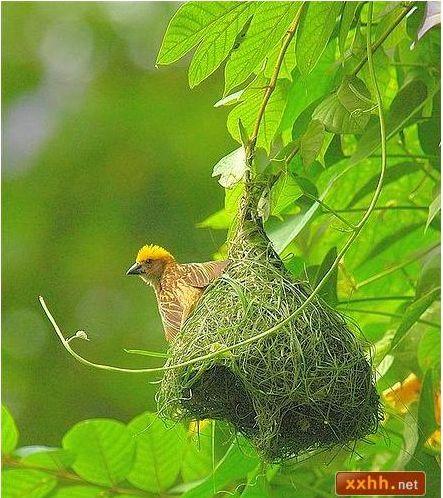 織巢鳥4.JPG