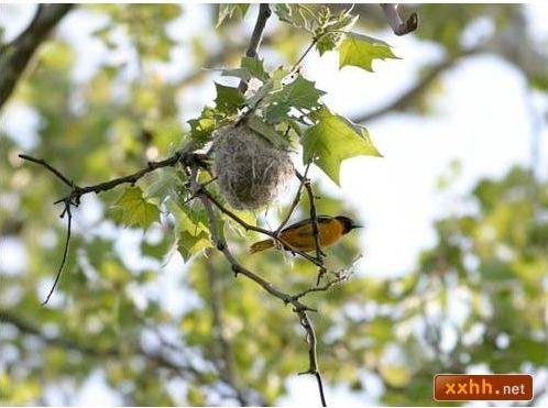 織巢鳥6.JPG