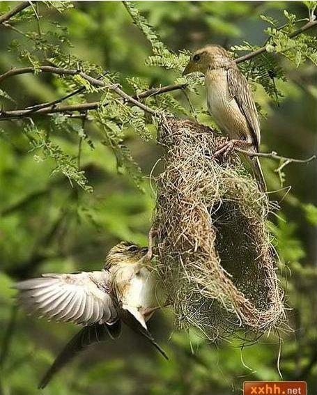 織巢鳥9.JPG