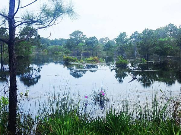 充滿沼澤的佛州