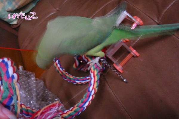 進口鸚鵡玩具-變形繩索-螺旋攀爬棉繩棲木玩具-2