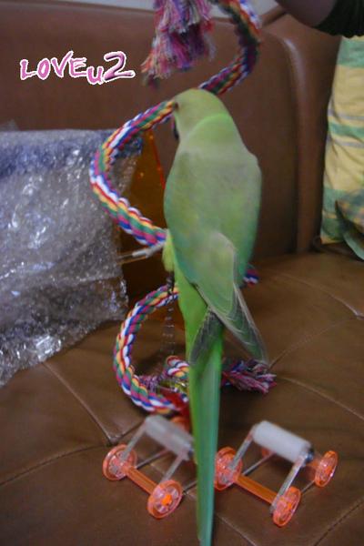 進口鸚鵡玩具-變形繩索-螺旋攀爬棉繩棲木玩具-3