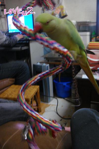 進口鸚鵡玩具-變形繩索-螺旋攀爬棉繩棲木玩具-4