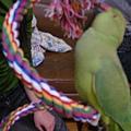 進口鸚鵡玩具-變形繩索-螺旋攀爬棉繩棲木玩具-8