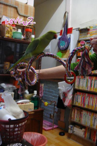 進口鸚鵡玩具-變形繩索-螺旋攀爬棉繩棲木玩具-9