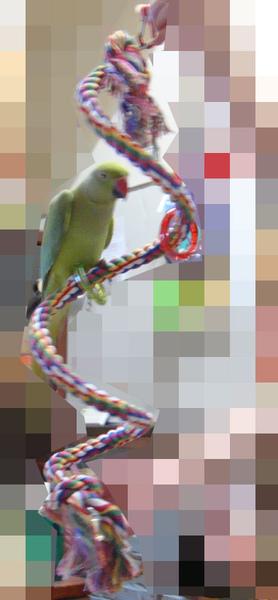進口鸚鵡玩具-變形繩索-螺旋攀爬棉繩棲木玩具-11