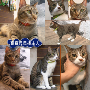 catb5630.jpg