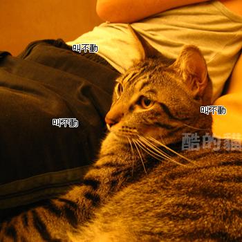 20061119124102968.jpg