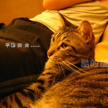 20061119124102691.jpg