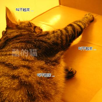 20061119124250448.jpg