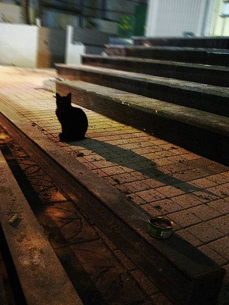 牯嶺街小貓群