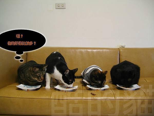四貓吃美食