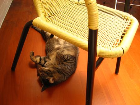 虎皮睡午覺