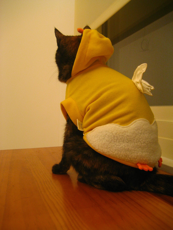 露露小雞裝