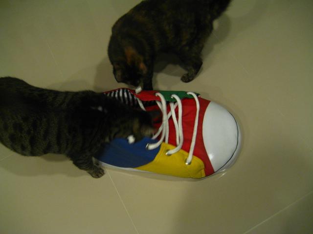 露露穿新鞋