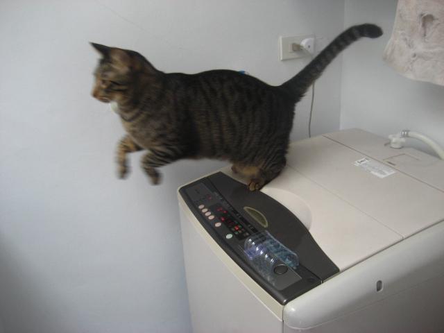 虎皮老愛開洗衣機
