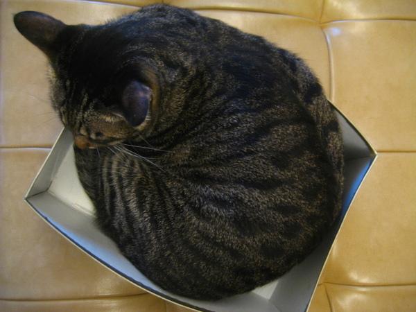 虎皮塞鞋盒