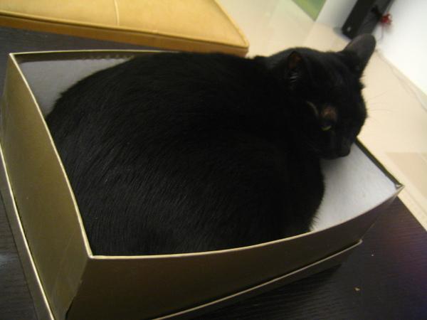 渣渣塞鞋盒