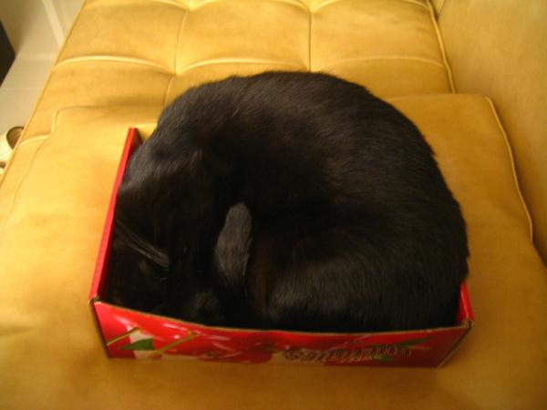 渣渣塞櫻桃盒
