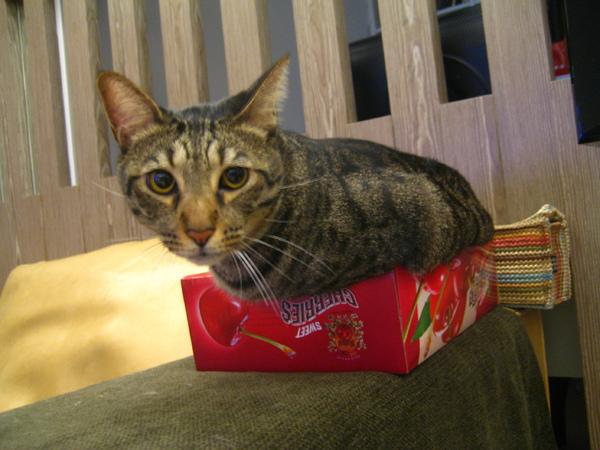 虎皮塞櫻桃盒