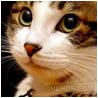 CAT.bmp