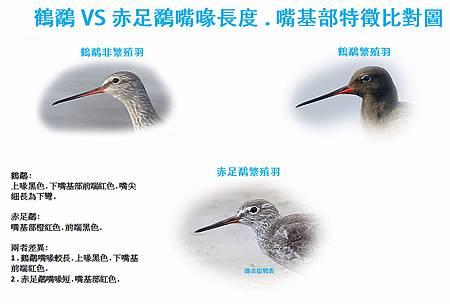 鶴鷸嘴基部比對圖.jpg