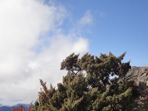 21玉山山景2011年.jpg