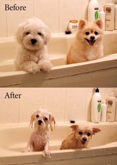 洗澡前與洗澡後.jpg