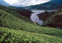 250px-Sri_Lanka_Teeplantage.jpg