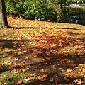 2013-10-16 13.42.39.jpg