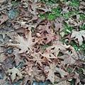 2013-10-20 12.09.37.jpg