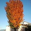 2013-10-27 15.56.10.jpg