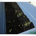 110512-蔬菜01.JPG