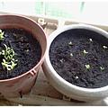 110507蔬菜&菊花.jpg
