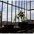 110501-二樓陽台一景02.jpg