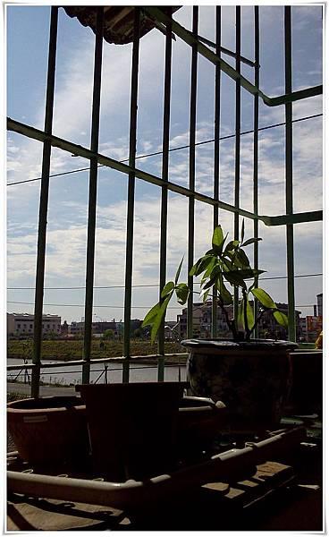 110501-二樓陽台一景01.jpg