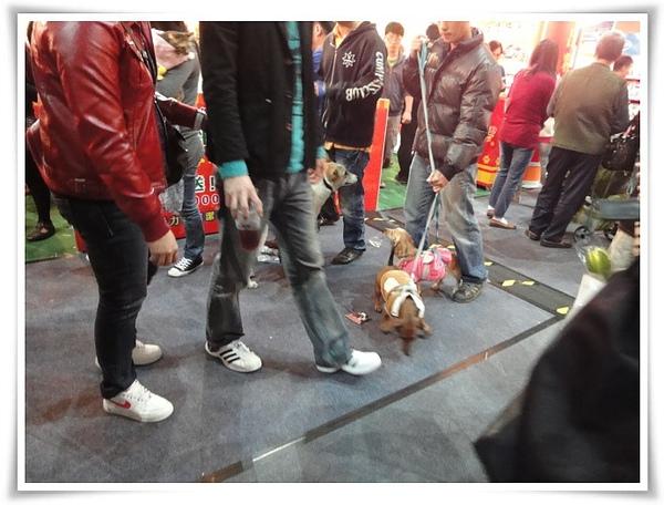 高雄巨蛋寵物展-群犬們.JPG