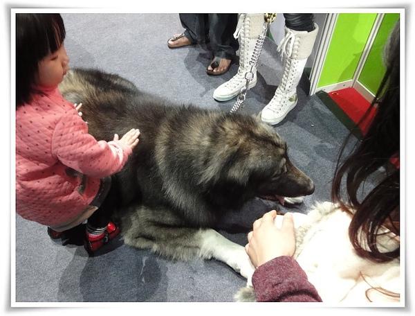 高雄巨蛋寵物展-不知名巨犬04.JPG